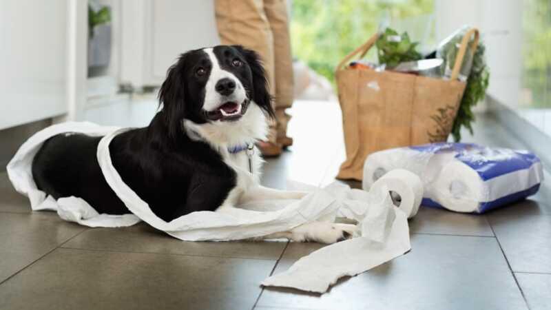 9 stvari koje vaš pas ne misli da razumijete