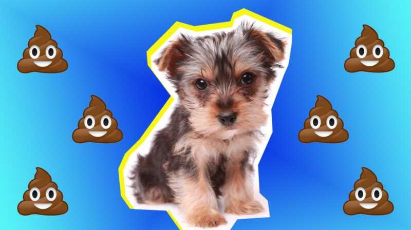 Da li vaš pas jede sopstveni udar? Evo kako da zaustavite Nasty naviku
