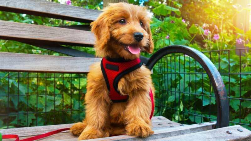 В света на сладките кучета, тези очарователни смесени породи са там, където е