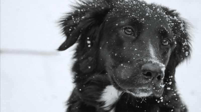 Hur man hjälper din hund att undvika torr, kliande hud i vinter