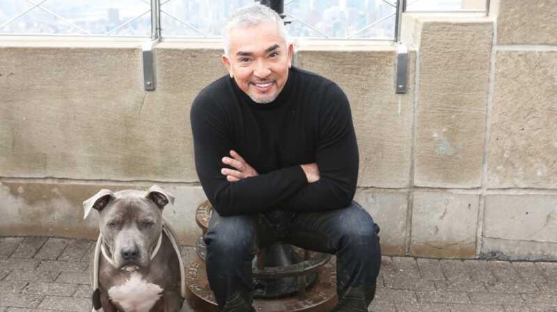 Cesar Millan nam daje neke od najočuvanijih i najaktivnijih treninga za psa