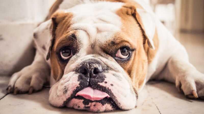 6 patarimai, kaip padaryti tavo gyvenimą kaip šunį tėvus mažiau stresą