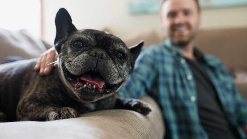 5 patarimai, kaip sumažinti šuns nuleidimą