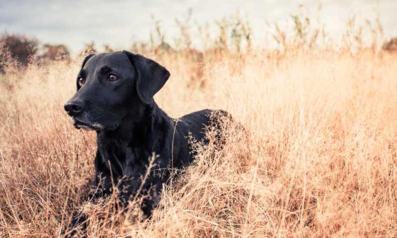 100 namn för svarta hundar perfekt för din nya valp