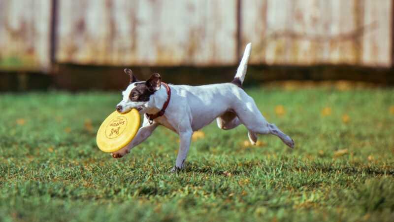 7 små sätt att öka din hunds mentala hälsa