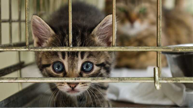 Razmišljaš li o usvajanju mačke? Nema boljeg vremena od sezone mače