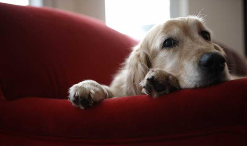 8 znakova da je vaš pas je naglasio