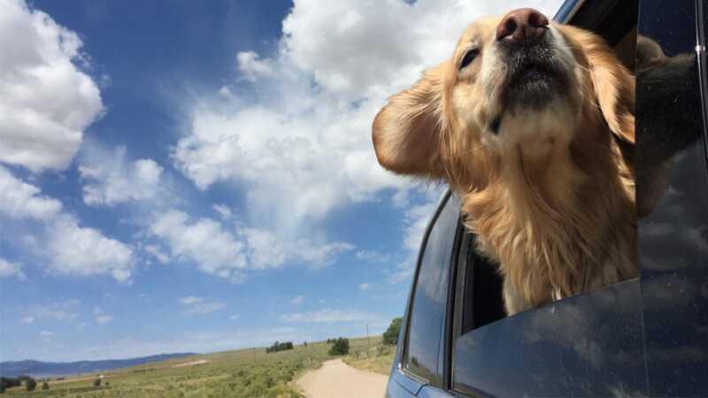 Vaš popis za ljetni put za uzimanje cestovnog putovanja sa svojim psom