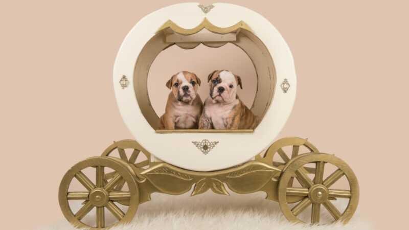 56 nomi di animali domestici ispirati al disney, perfetti per il tuo piccolo principe o principessa