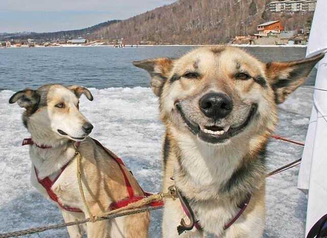 Máme 99 vtipných jmen psů z pop kultury - a Anderson pooper je jeden