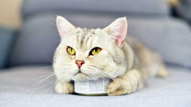 Miért dühösek a macskák az ételükön?