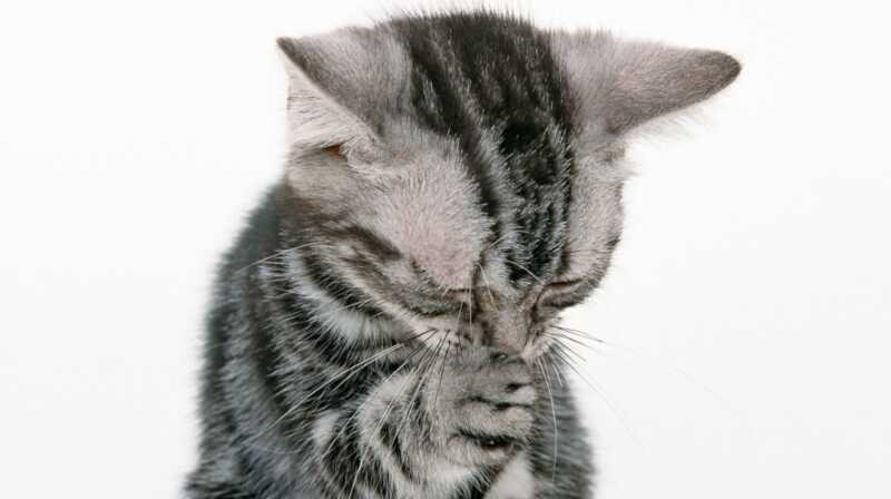 Katt nyser är bedårande, men de kan också betyda att du behöver ringa till veterinären