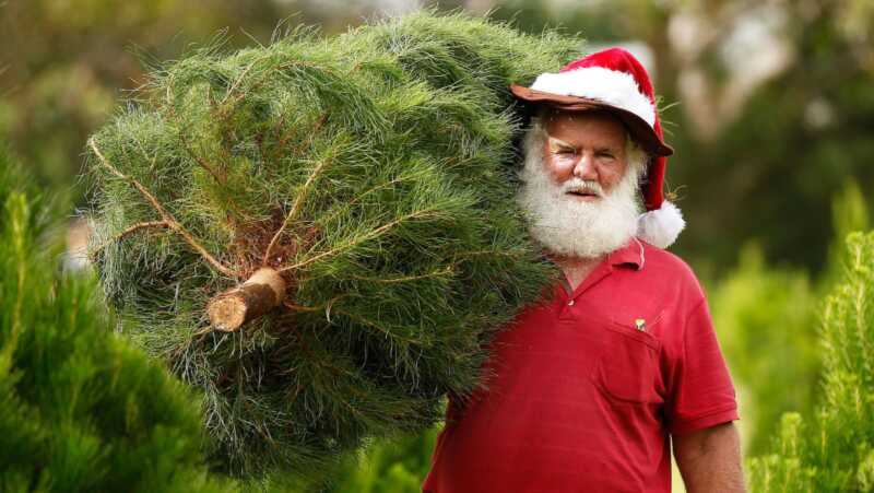 Mitä joulupuupuute merkitsee sinulle? isompi hinta
