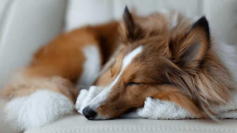 10 pasmina psa koje se ponašaju kao mačke - u slučaju da zaista ne možete nadoknaditi svoj um