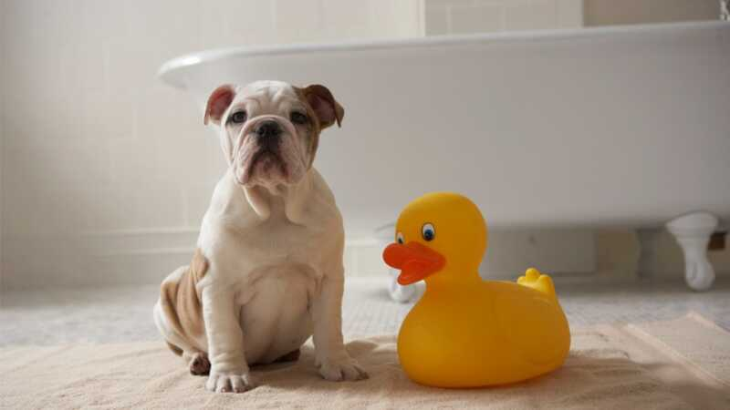 11 padomi, kas padarīs jūsu suņa vannas laiku daudz vieglāk