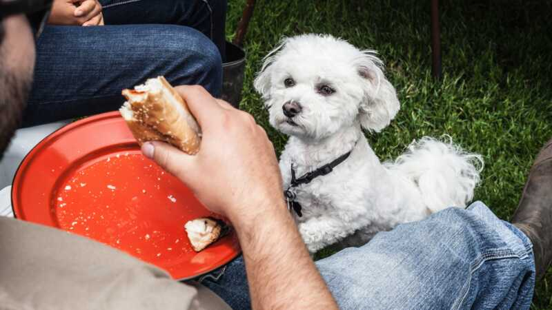 Ljudska hrana koja je sigurna za pse