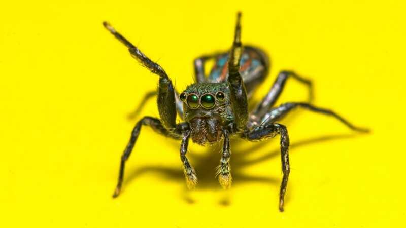 Kada provoditi liječenje pauka kod kuće - i kada pozvati 911