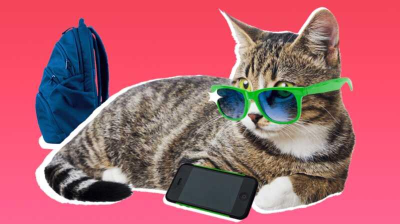 Kako su tinejdžeri poput mačaka