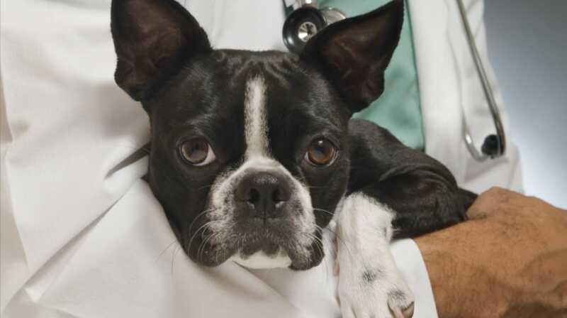 7 načina kako smanjiti skrb o veterinama bez ugrožavanja zdravlja vašeg ljubimca