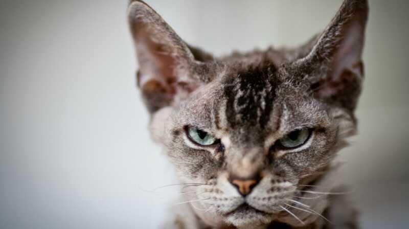To si ti, ne tvoja mačka: 7 stvari koje radite da smetaju vašoj mački