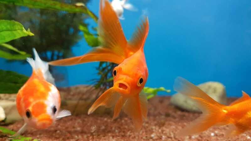 9 bitnih savjeta za savršenu njegu vaše nove ribe