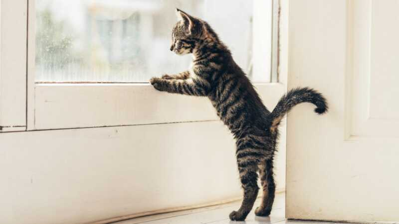 Должны ли кошки допускаться на улицу? ключевые моменты с обеих сторон дебатов