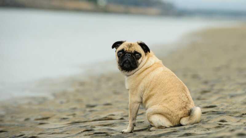 6 koera tõugu, kes ei tee vees hästi