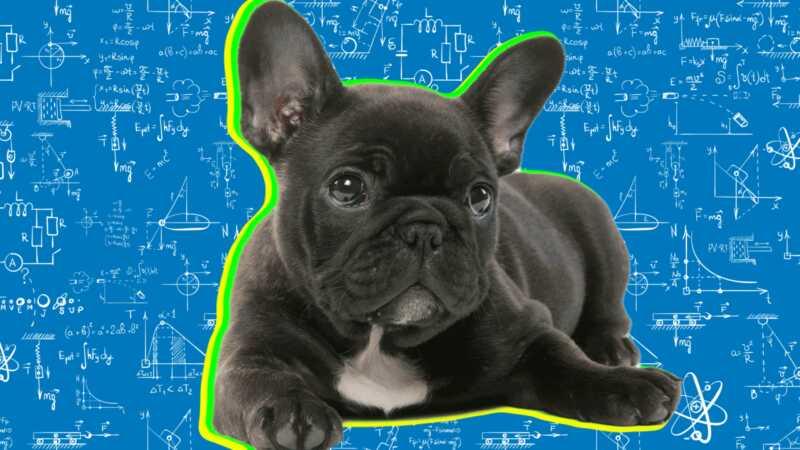 Hur intelligent är din hund? här är hur du kan ta reda på det