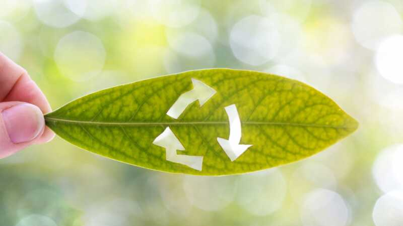 52 enkle måter å gå grønn hjemme uten å gå i stykker