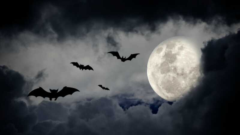 Daryk tai patys šikšnosparnių kostiumą taip lengva Niekas nežinotų, kad užtruks tik 10 minučių