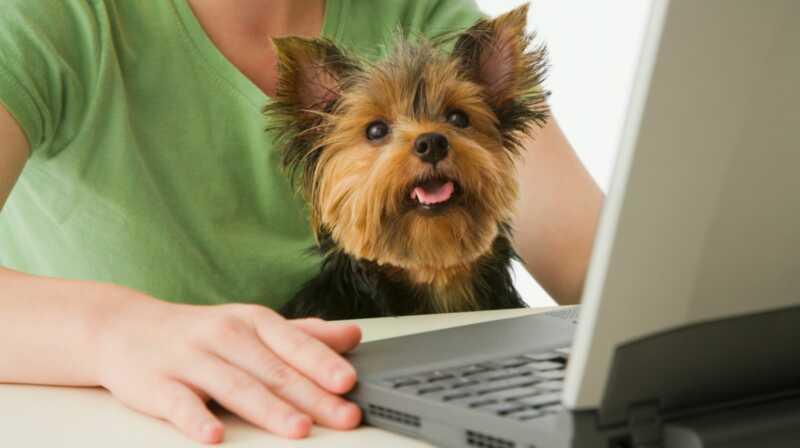 Ikke hater oss når du blir helt avhengig av disse bedårende kjæledyrbloggene
