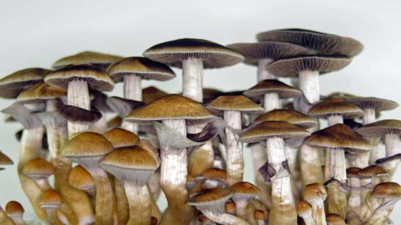 Magiske svampe kan være nøglen til behandling af depression og angst