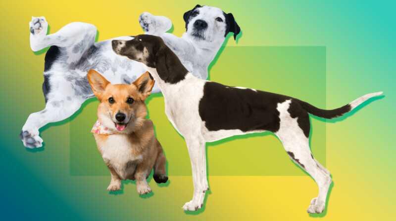 En komplett guide till hela hundens kroppsspråk