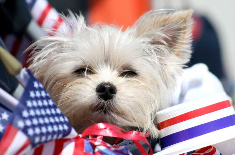 8 patarimai, kaip išlaikyti šunį ramus šių metų liepos 4 d. Fejerverkų