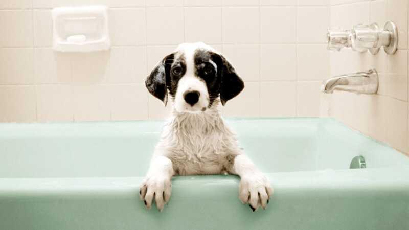 Da li vaš pas loše mirise? to bi moglo da označi ozbiljno zdravstveno pitanje