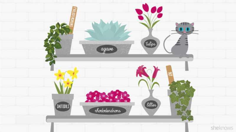 12 toksičnih biljaka koje mačke vlasnici ne bi trebali držati u svom domu