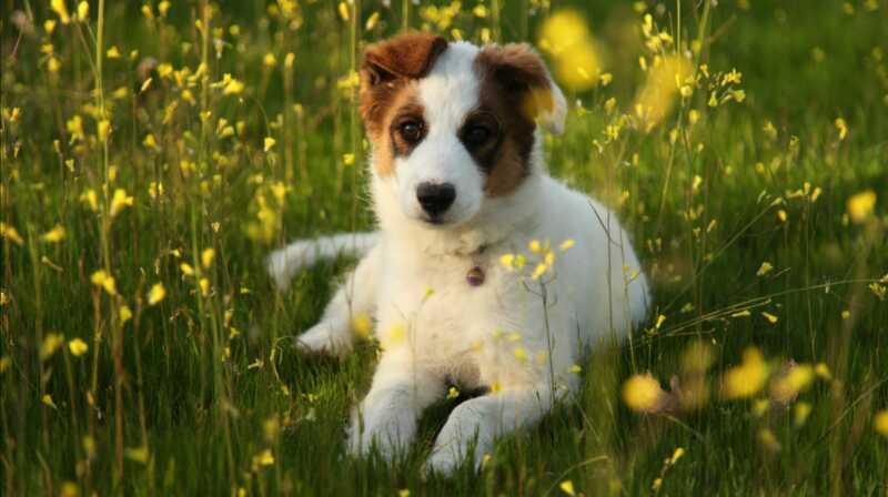 4 травы для естественного обезболивания собак