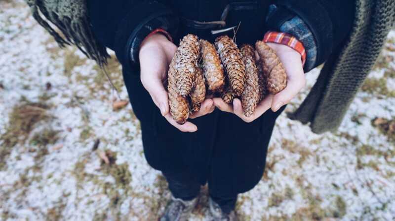 Ideja o zanatstvu snega: napravite pinecone pticu sa decom