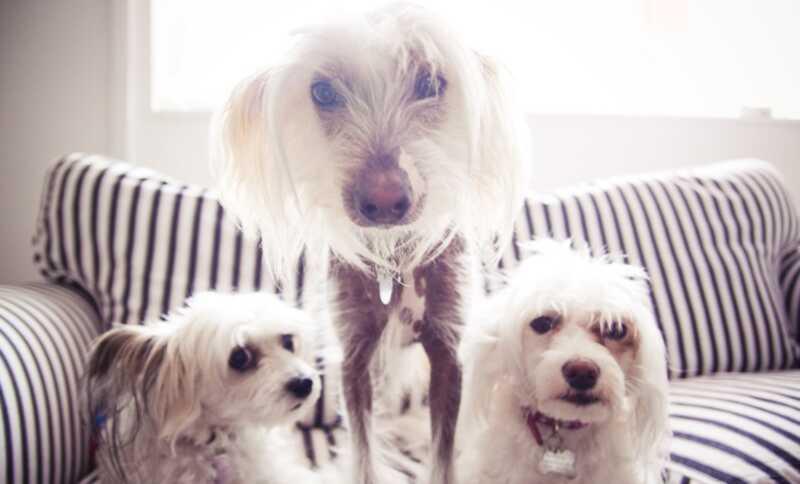 Hur många hundar är för många?