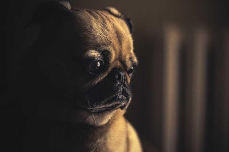 Evo kako stvarno košta da se psa spusti