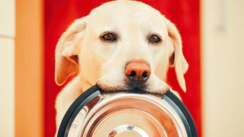 23 domaće pasne hrane recepte vaš štene će apsolutno ljubav