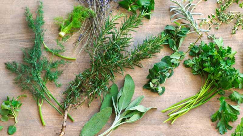 6 neobi ~ nih biljaka koje moete po ~ elje da vidite na policama za prehrambenu industriju