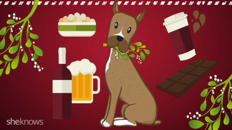 Ang 10 pinaka mapanganib na panganib sa dog ng holiday