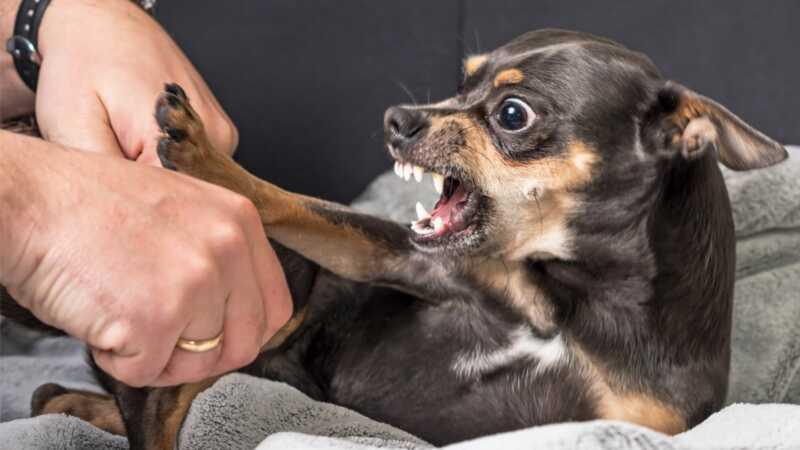 Ako vaš pas slučajno postane agresivan, možda ćemo znati zašto