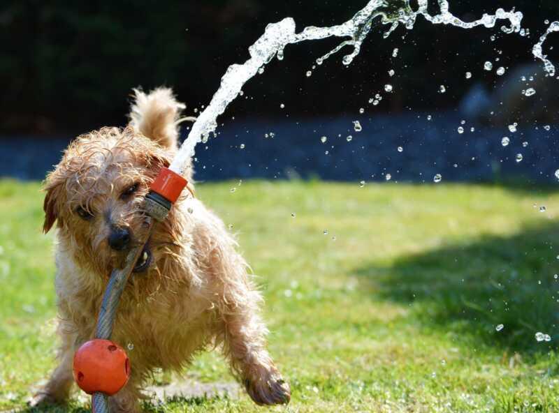 4 τρόποι για να διατηρήσετε το σκυλί σας ενεργό και διασκεδασμένο σε ζεστό καιρό