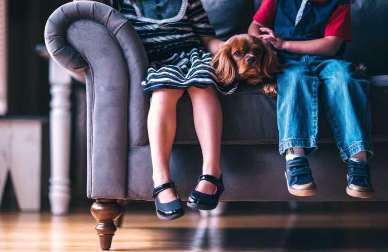 De wetenschap heeft bewezen dat kinderen liever met huisdieren dan broers en zussen omgaan