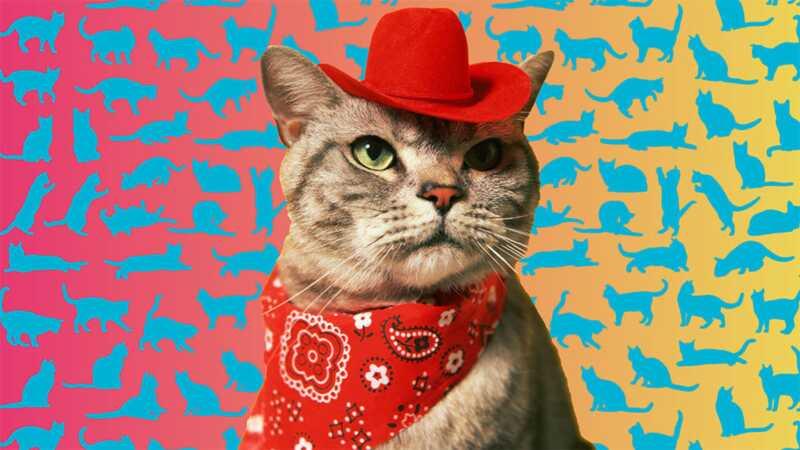 Išsamus katės kūno kalbos vadovas