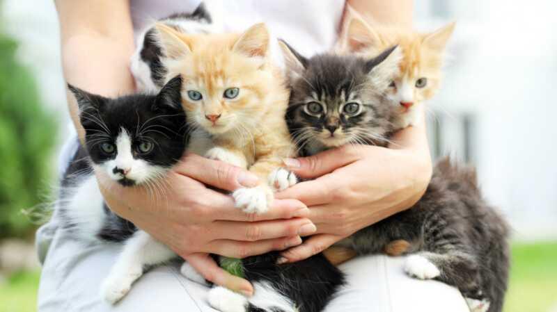 9 razloga za usvajanje mačke je apsolutno najbolji