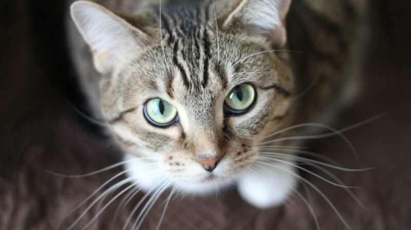 Nu vet vi varför katter verkligen har whiskers