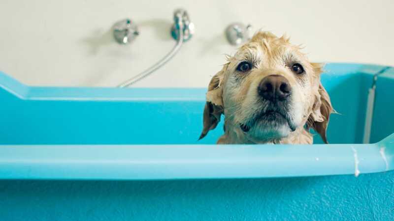 Trebate li koristiti pseće jabučni ocat na pse?